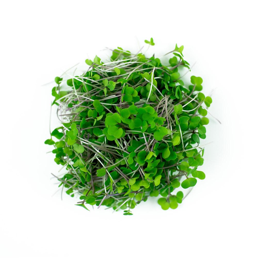 Russian Kale Microgreen
