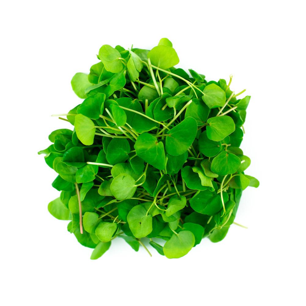 Buckwheat Microgreen