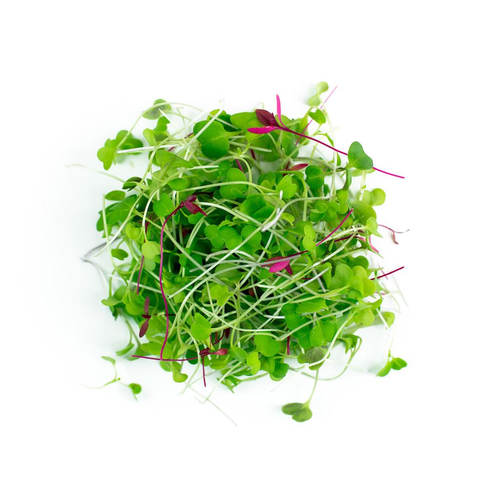 Appalachian Blend Microgreens