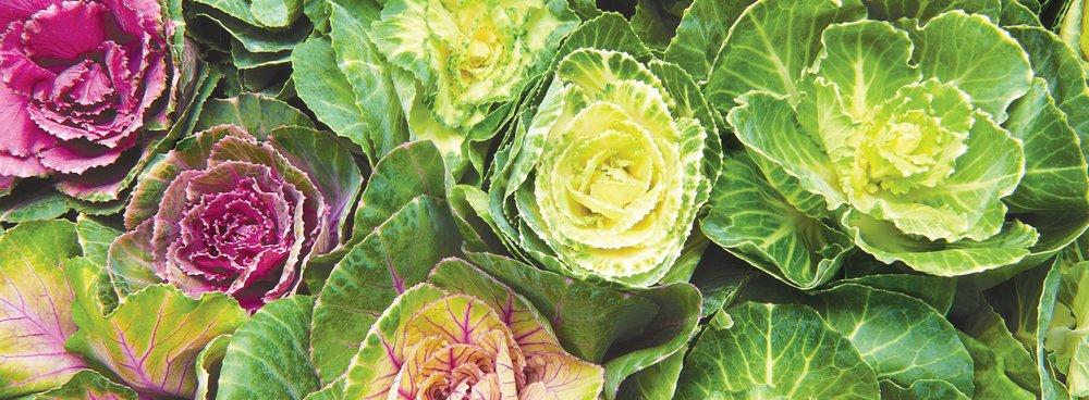 Kale-Banner.jpg