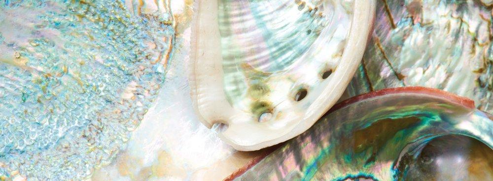 Abalone-Banner.jpg