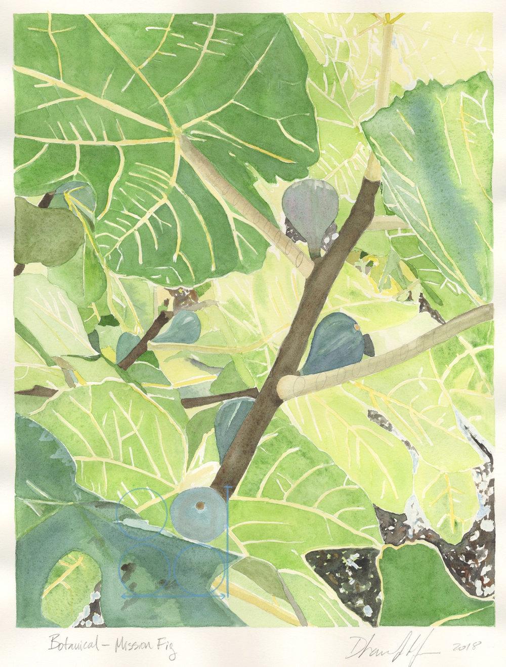 Botanical—Mission Fig