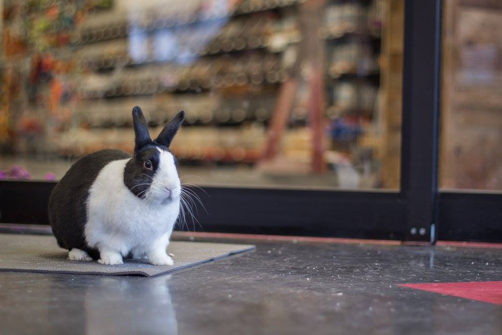 LEARN MORE AT BUNNY BASICS CLASS - REGISTER HERE!Photo Credit  //  Amanda Suchorski