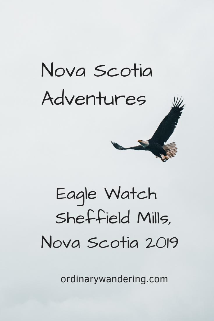 Bald Eagles at Sheffield Mills 2019