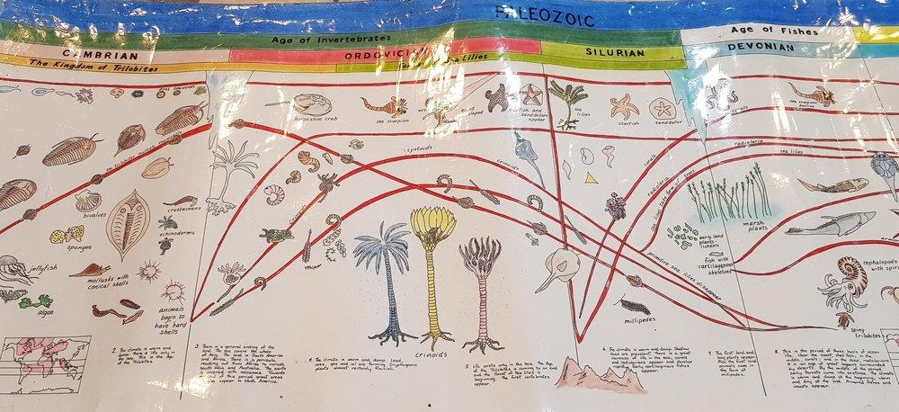 生命起源--一張圖搞懂三葉蟲到人類的演變   蒙氏的課程重視從巨觀到微觀,這不僅展現在五大主軸故事的層次與順序.,也展現在個別領域的課程引導。經由大張的時間軸圖表,解釋地球46億年的時間長河裡,生物逐漸演化歷程, 看見地球的霸主ㄧ直在變,藉此讓孩子有一個時間的縱深與演化的整體脈絡,也思考著下一次或正在進行中的物種演化,會將我們人類推向何方?