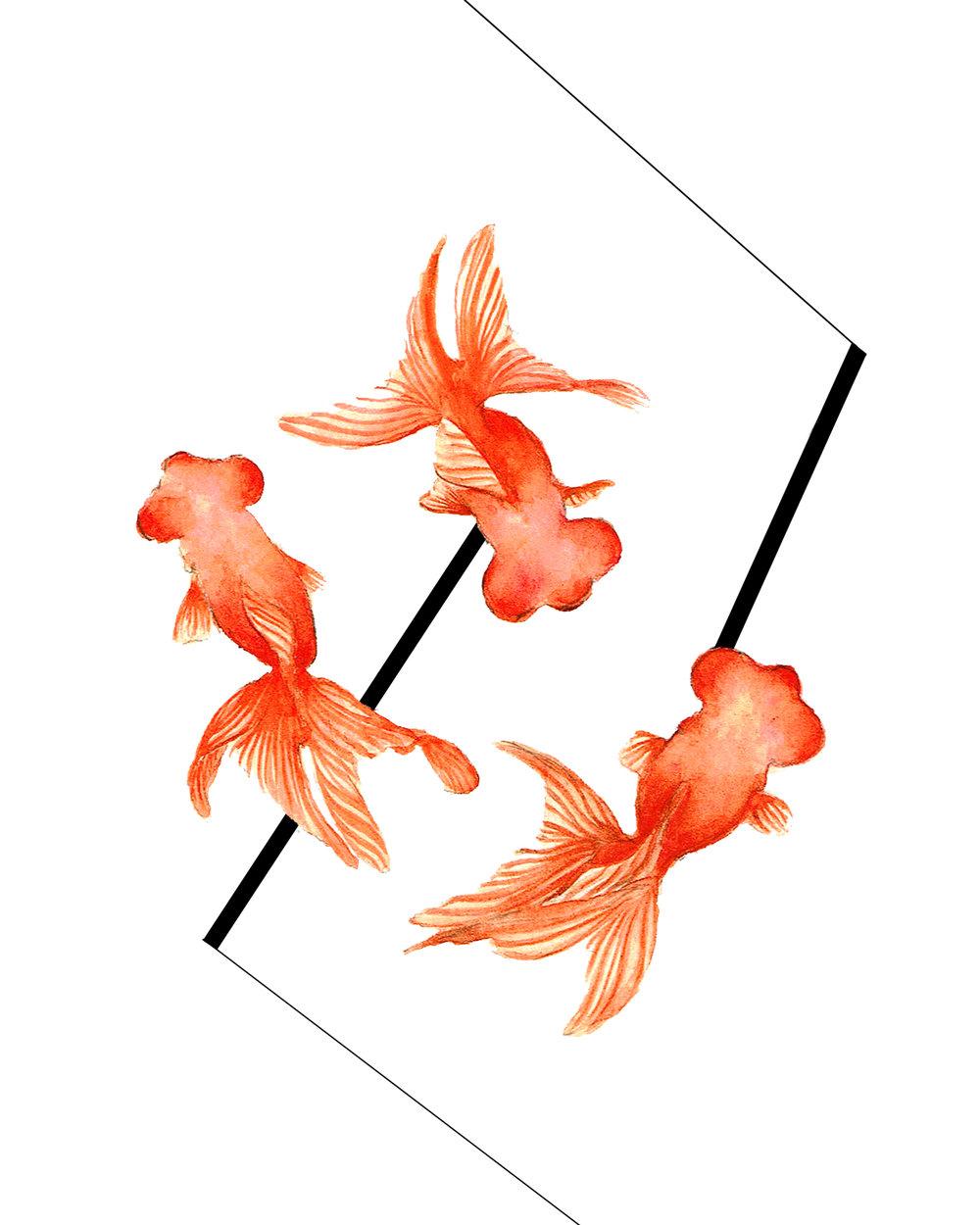 Gold Fish, 2015