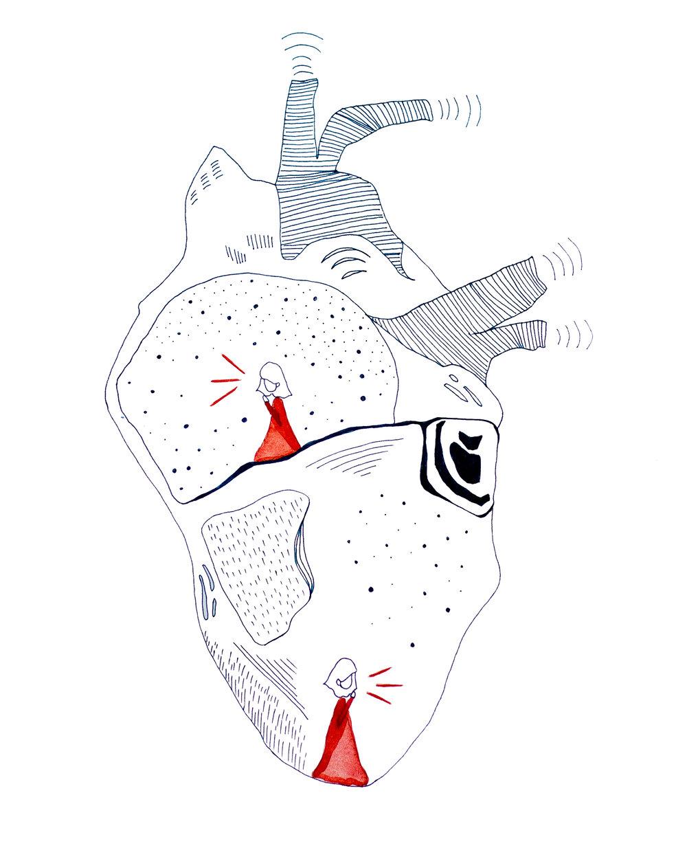 The-Aorta.jpg