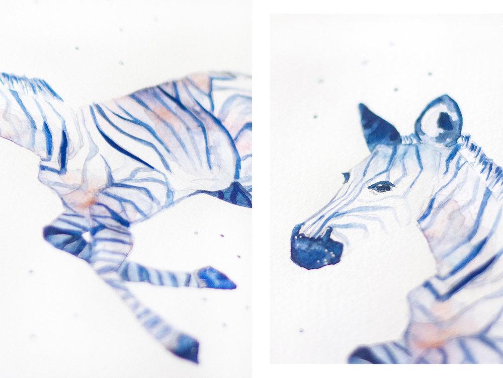 Zebra-iv.jpg