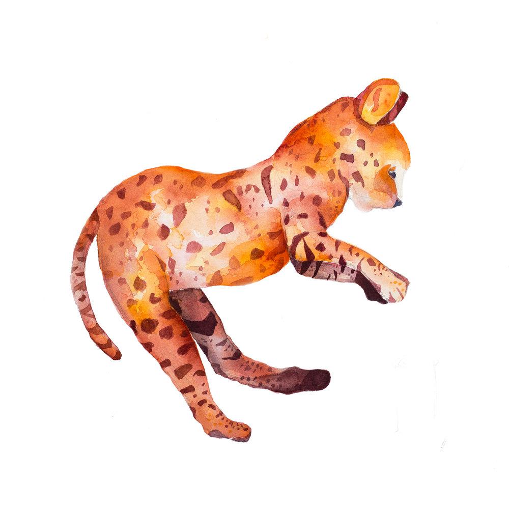 Civet Cat, 2016