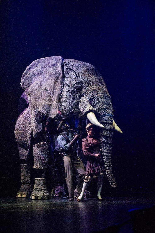 elephant-2-circus1903.jpg