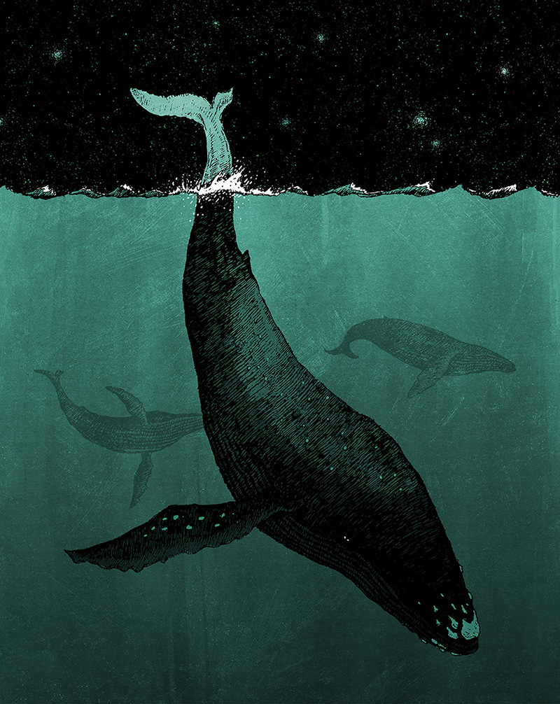 Whales_Small.JPG