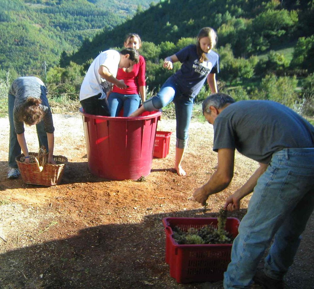 Studenti spremano l'uva