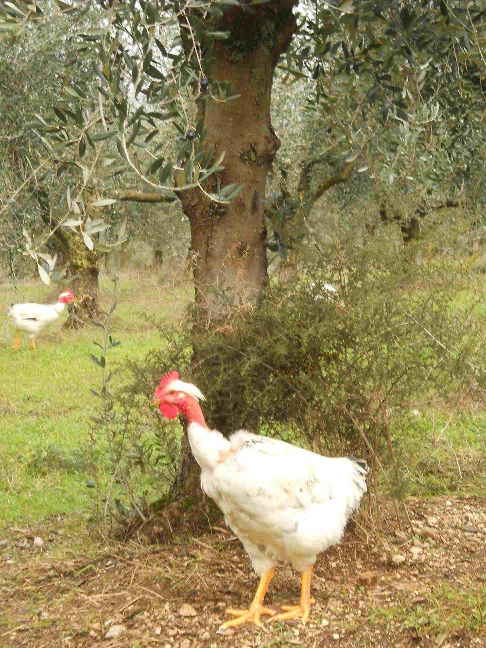 asparago5.jpg