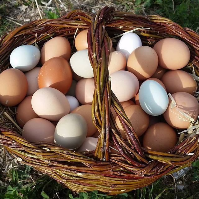 Spring brings lots of rainbow eggs! And Adolfo made us a nice new willow basket to hold them.