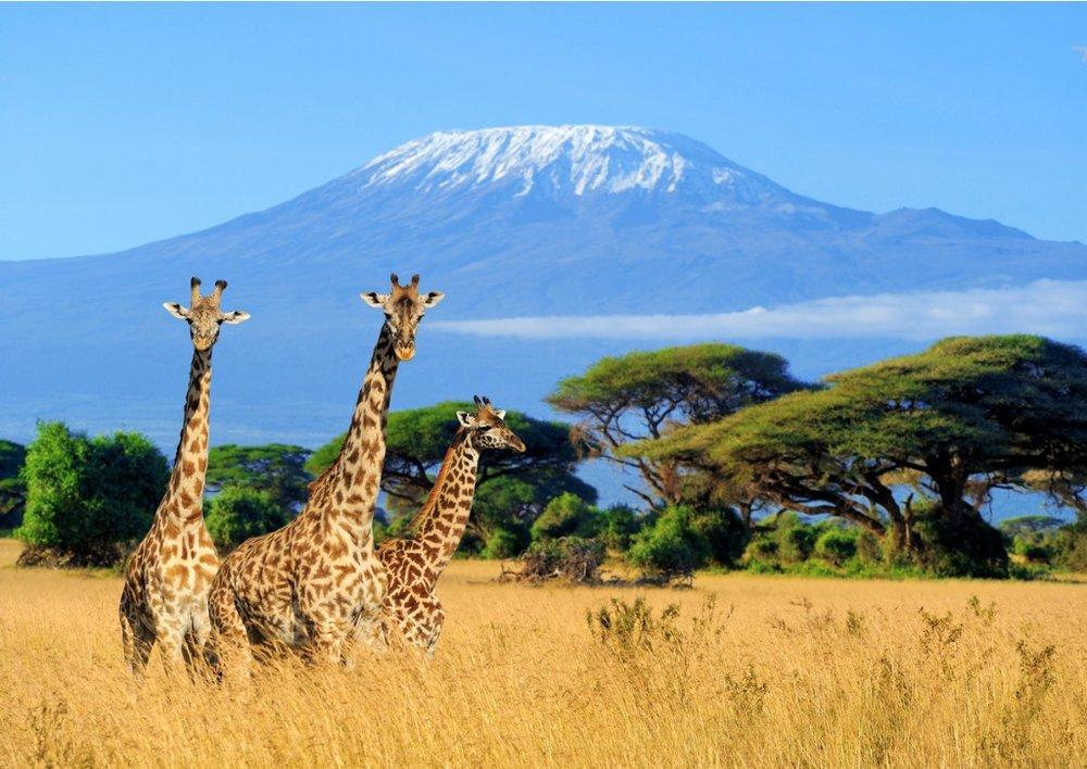 AfricanSafari.jpg