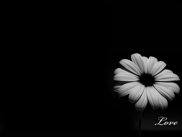 wallpaper_black_love_by_fotojenny.jpg