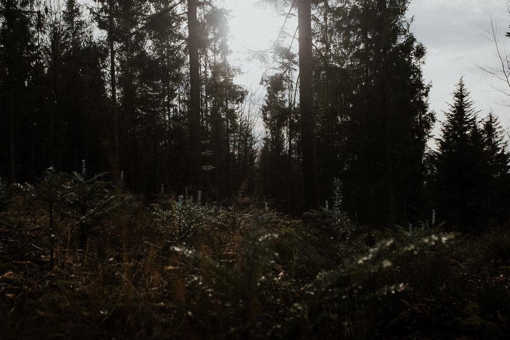 Sesja-narzeczenska-w-dolinie-eliaszowki-2.jpg