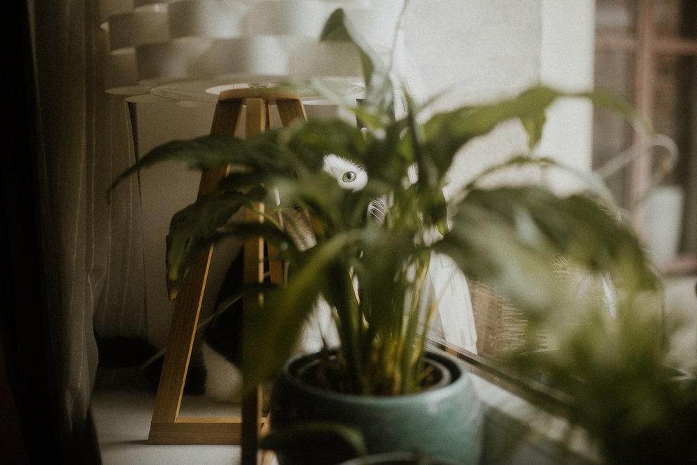 Sesja+rodzinna+fotograf+krakow-7.jpg