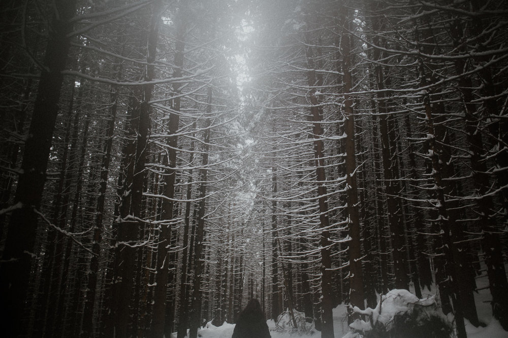 In cold silence of my forest