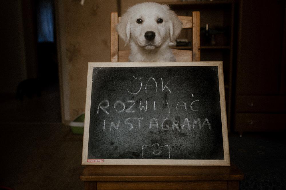 jak jako fotograf rozwijac swojego instagrama