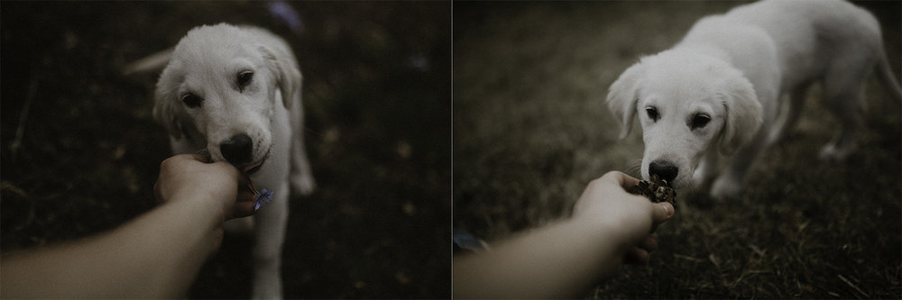 Dolina kobylanska spacer z psem 1.jpg