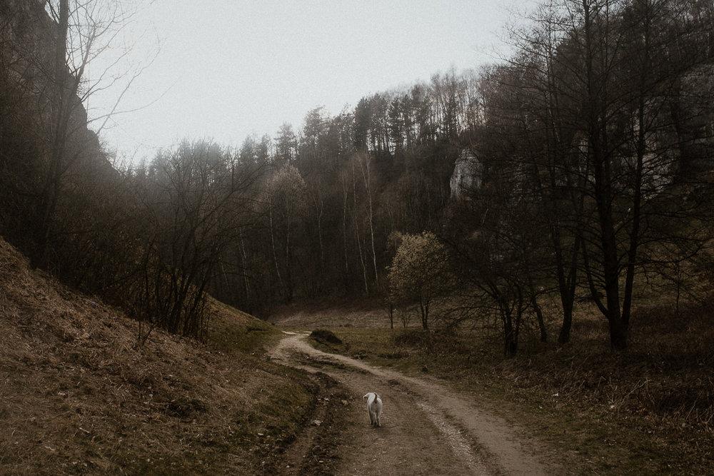 Dolina Kobylańska spacer z psem-3.jpg