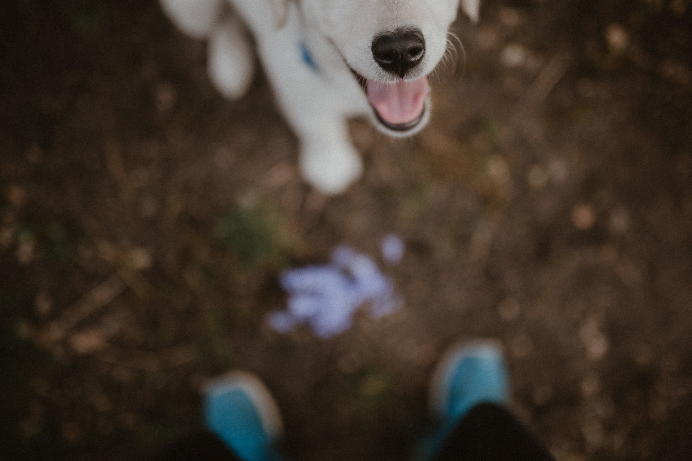 Dolina Kobylańska spacer z psem-6.jpg