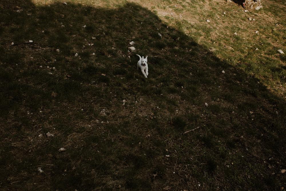 Dolina Kobylańska spacer z psem-11.jpg