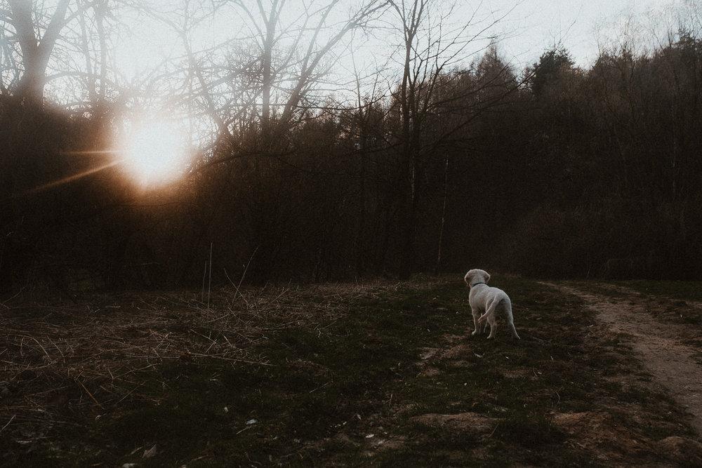 Dolina Kobylańska spacer z psem-15.jpg