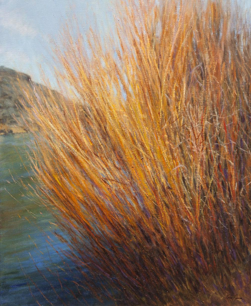 """Rio Willows • 14"""" x 11"""" • Oil"""