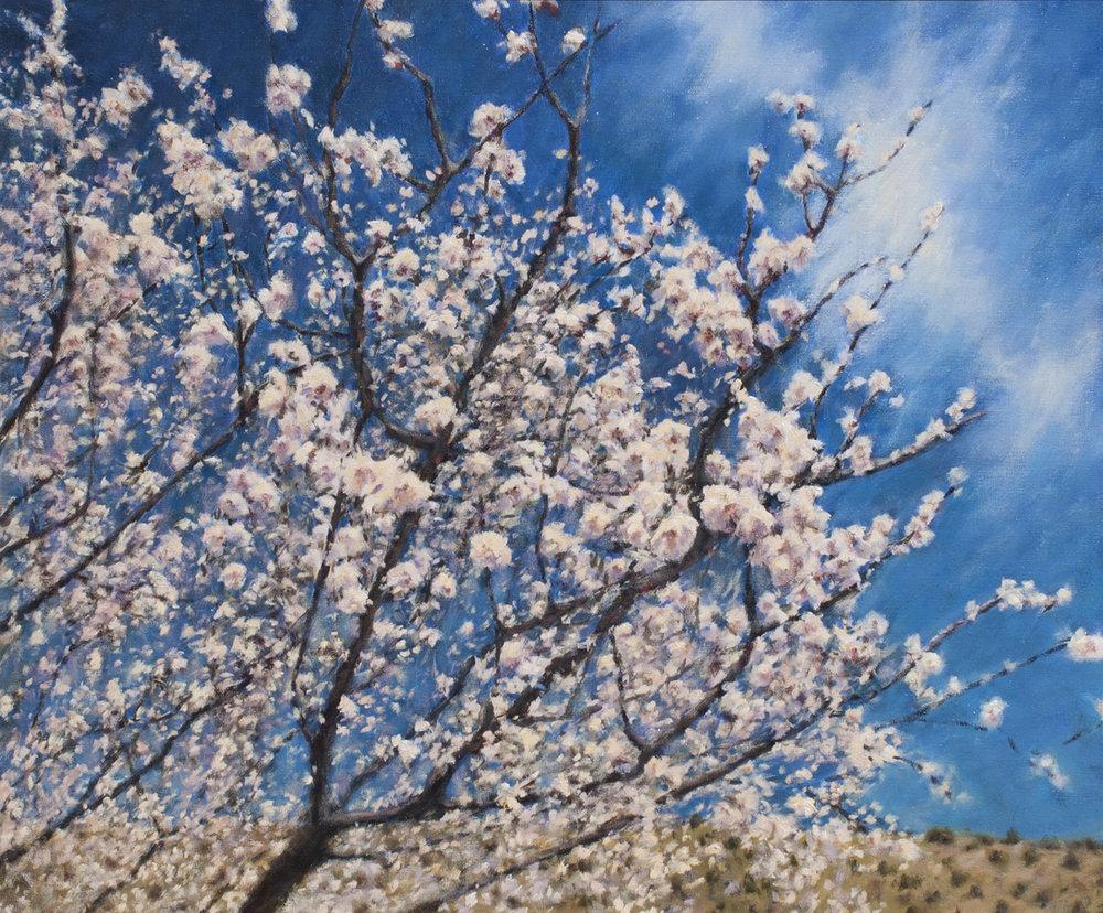 spring_is_in_the_air.jpg