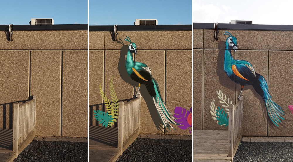 peacock before after.jpg