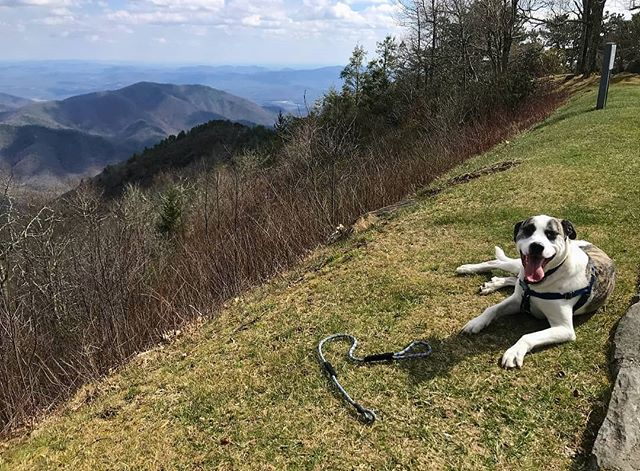 Wilbur hanging out off the Blue Ridge Parway with his new leash! Thanks for the picture @julienmelissas 😊 . . . . #hikewnc #blueridgeparkway #dogsthathike #petsofinstagram #dogsofinstagram #puppy #hikingwithpets #petsupplies #gearfordays #handmadegoods #doggo #mansbestfriend