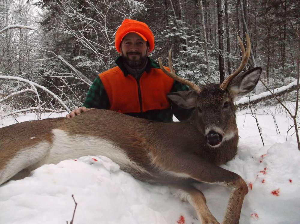 Maine white tail black powder