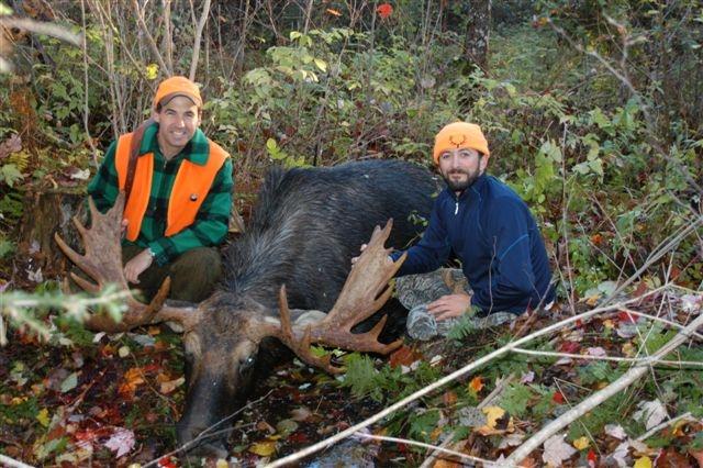 5.  Moose .JPG