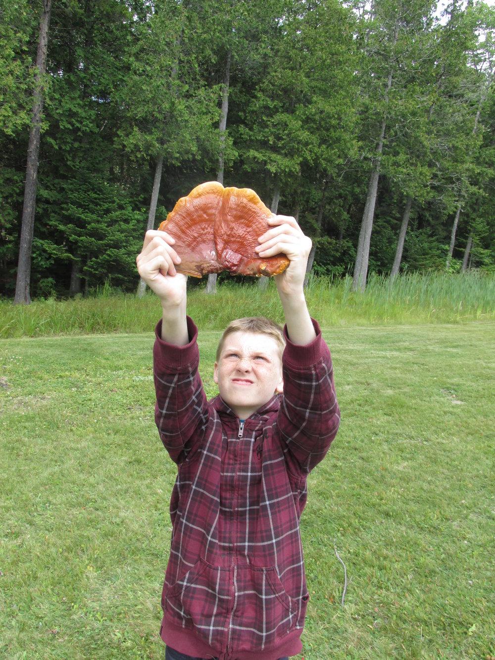 Mighty mushroom