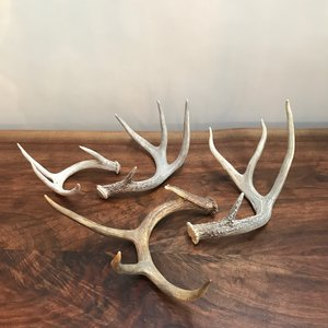 Antlers | Contact for pricing
