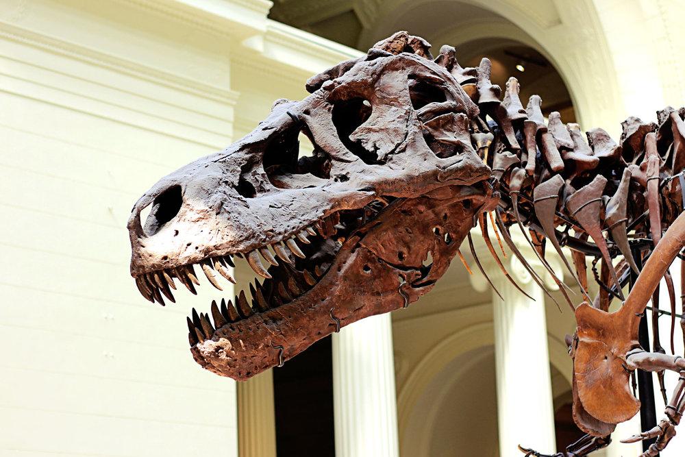Sue-Field-Museum.jpg