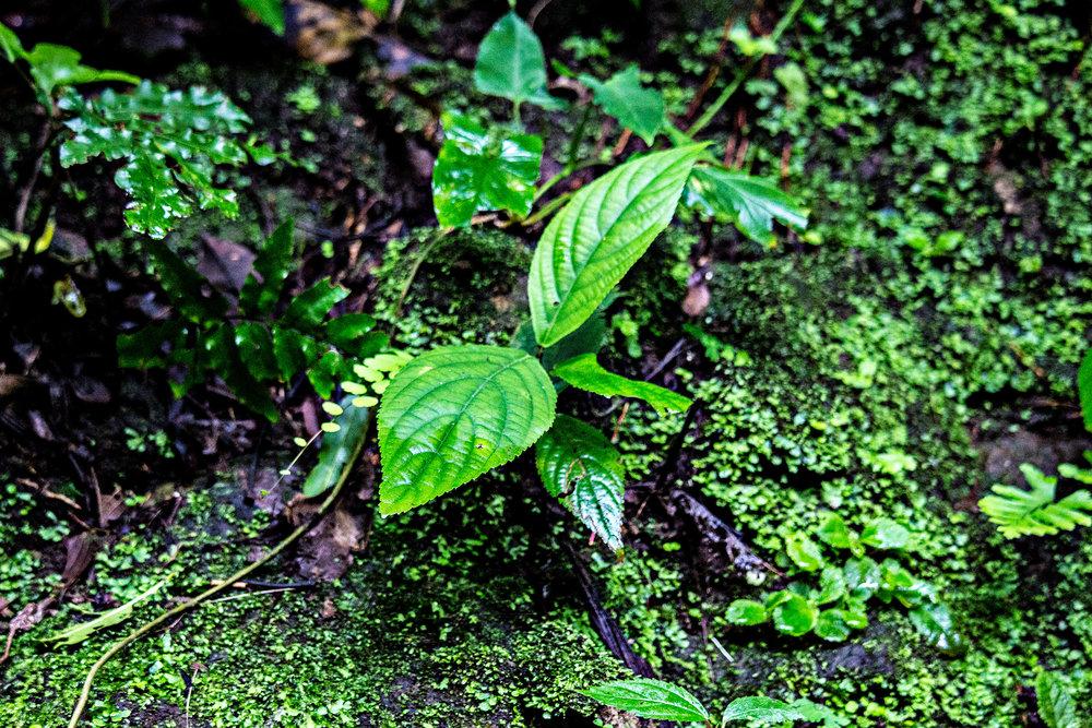 Buena-Vista-Plants.jpg