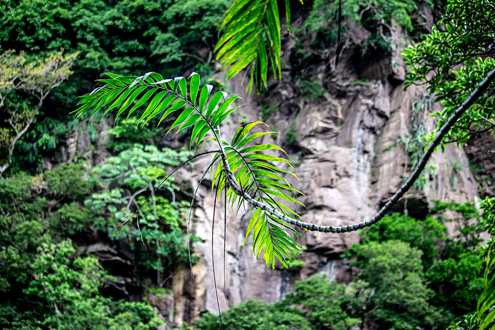 Buena-Vista-Plants2.jpg