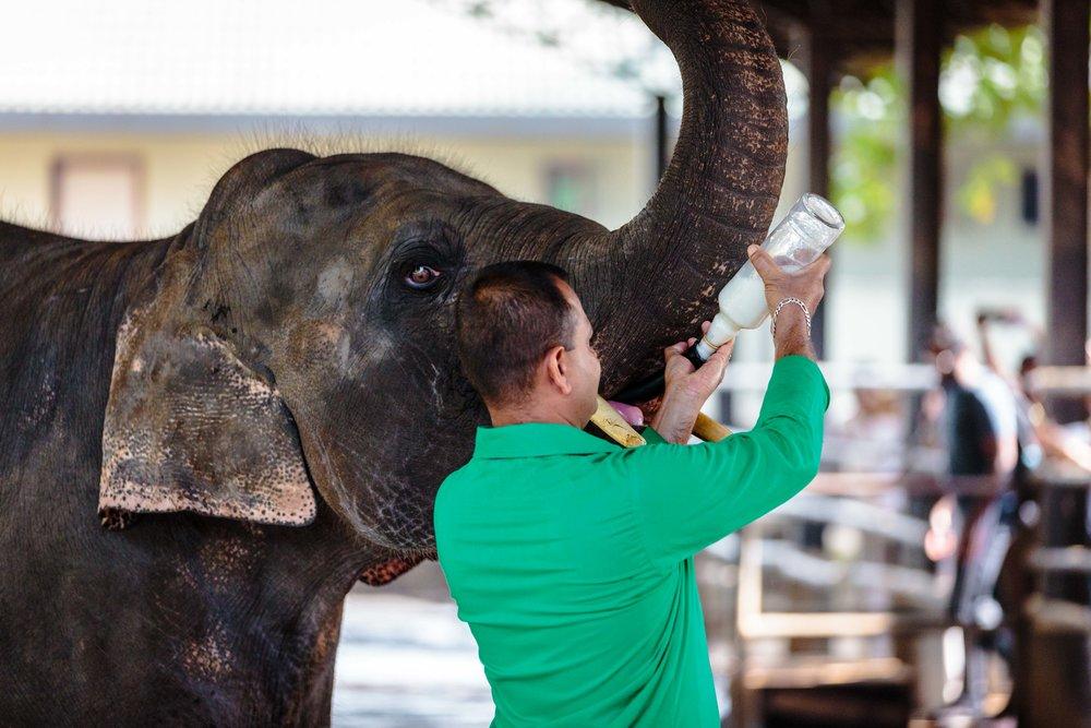 Milk for the Elephants
