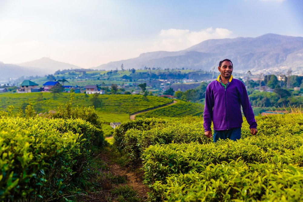 Our tour of the surrounding tea fields.