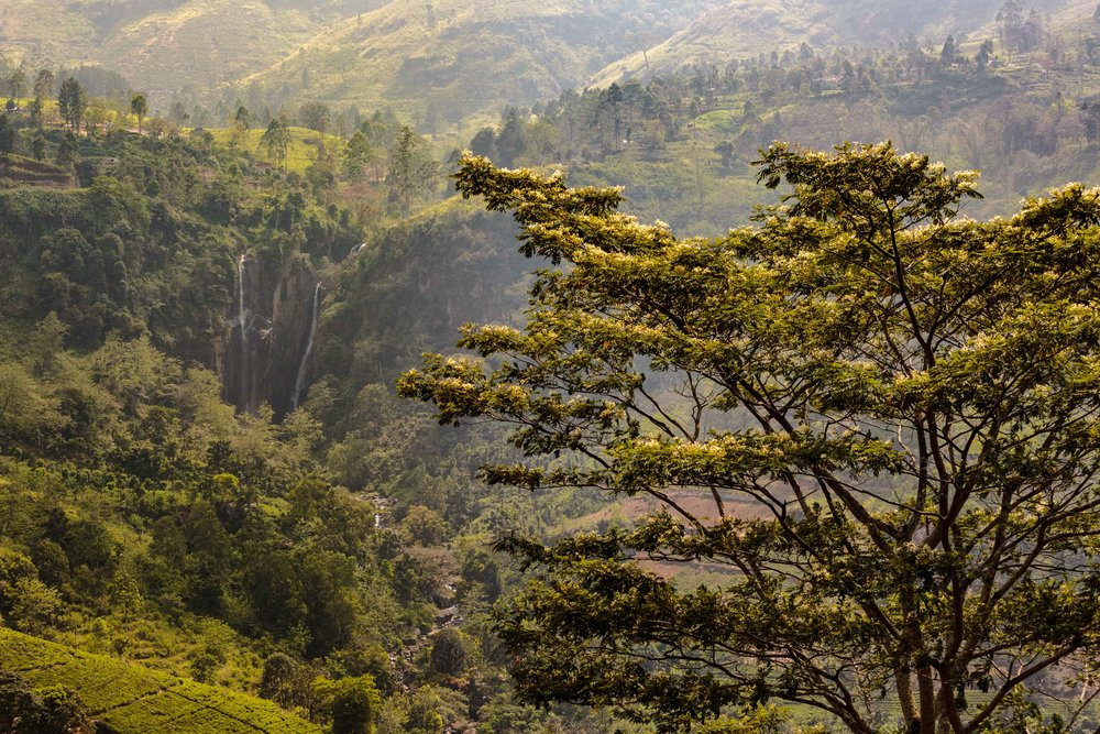 Not sure which of Nuwara Eliya's waterfalls this is, but it justified stopping to admire it.