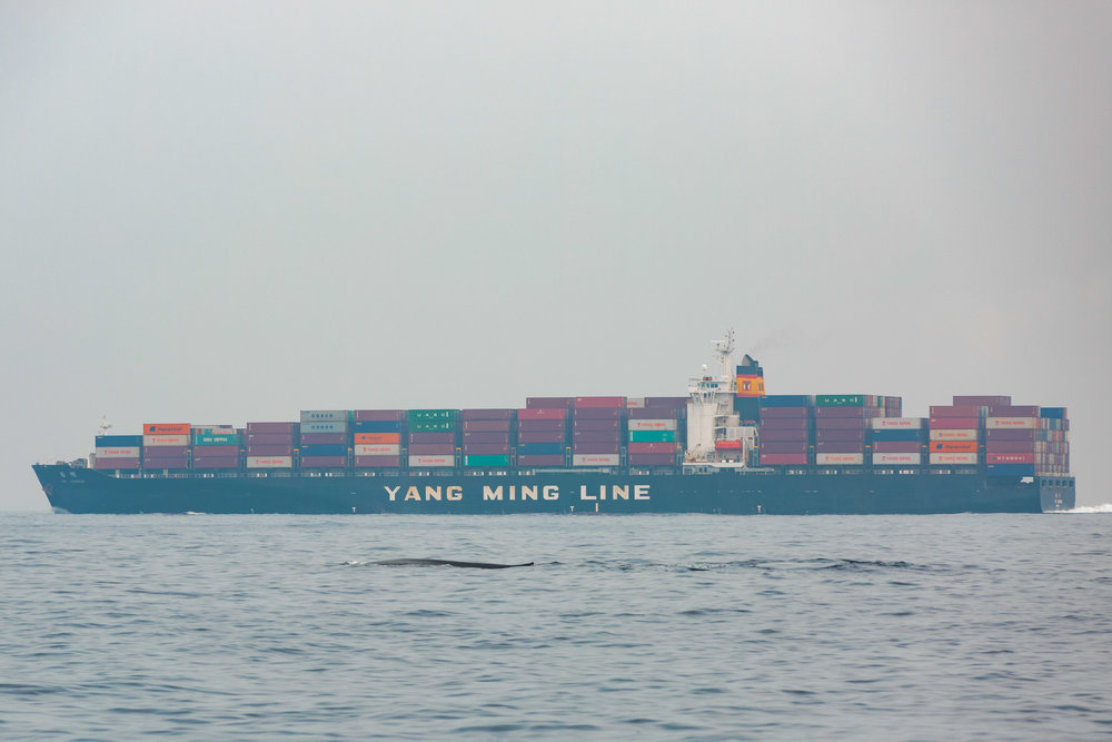 Just in a shipping lane, watching whales.