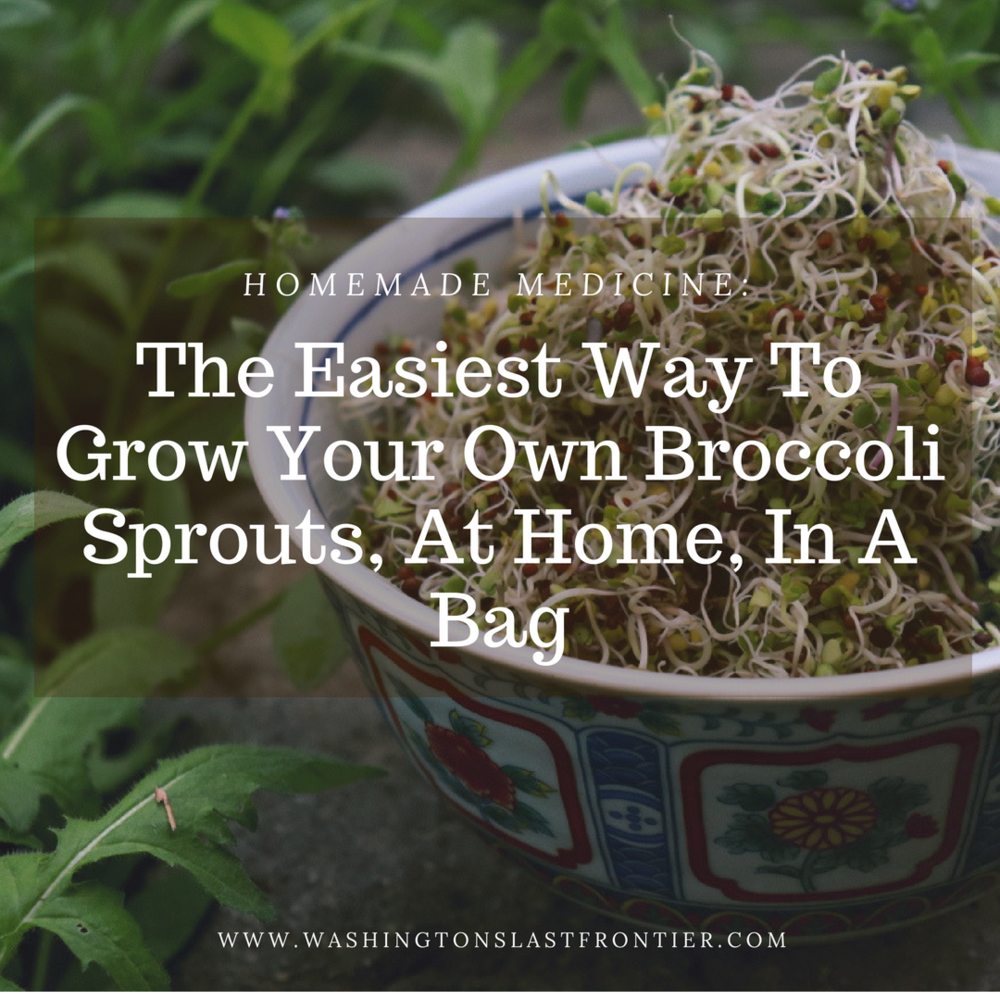 The Easiest Way To Grow Your Own Broccoli Sprouts, At Home, In A Bag.png