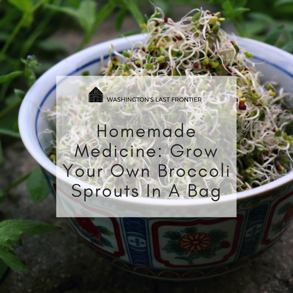 grow your own broccoli sprouts in a bag.png