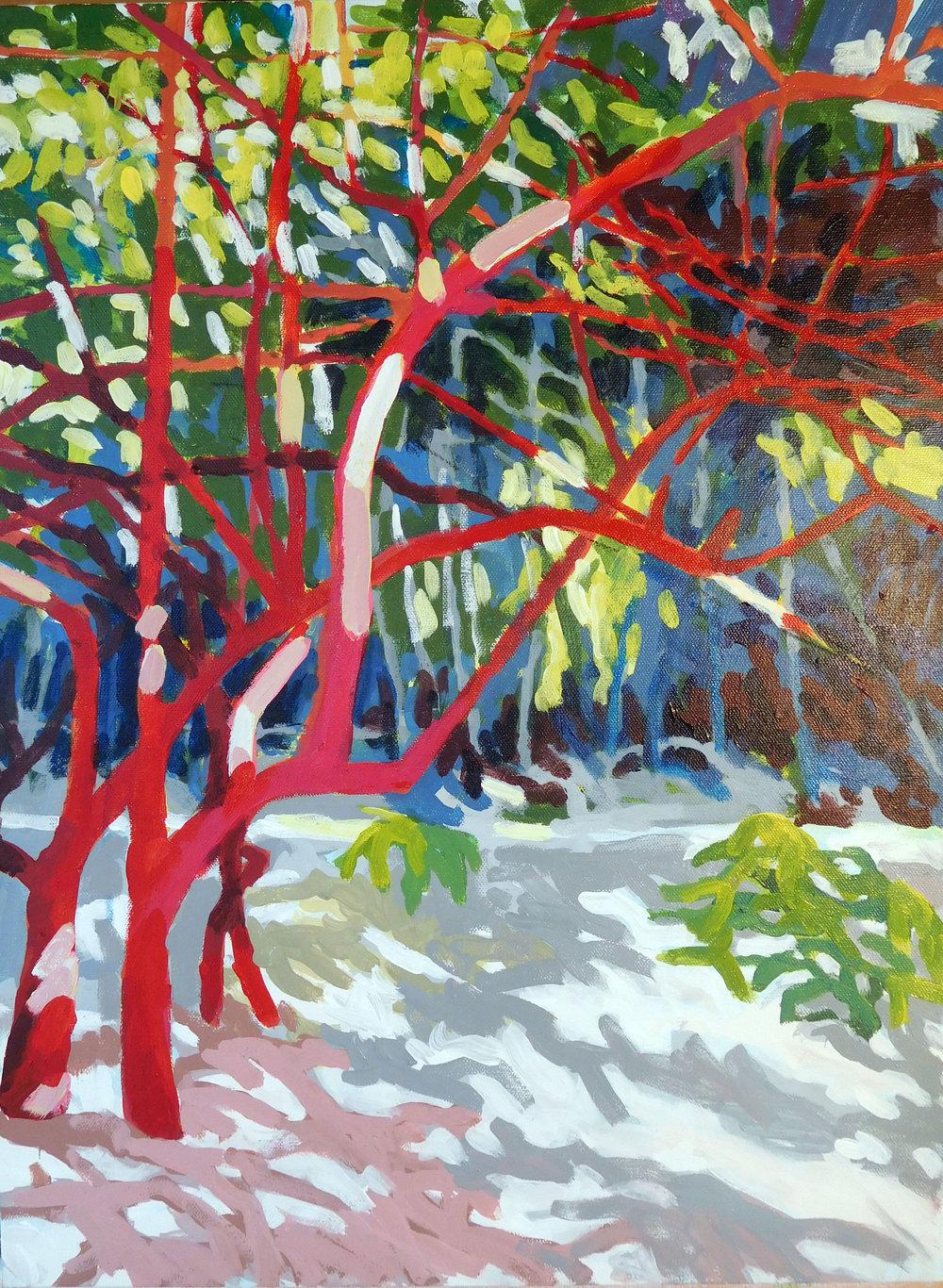 Tulum Tree 3.jpg