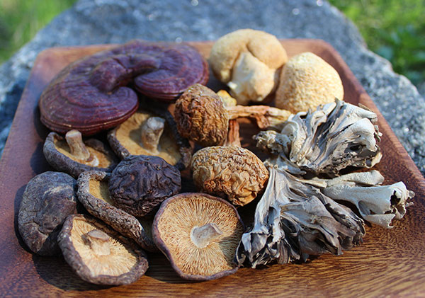 medicinal-mushrooms-dried-varieties.jpg