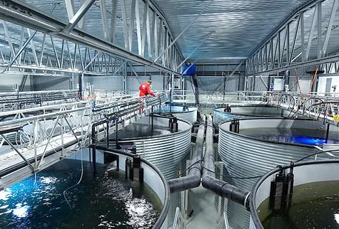 land-based-aquaculture2.jpg