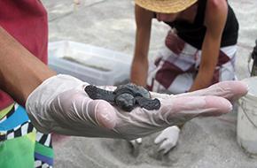 turtlehandnew.jpg